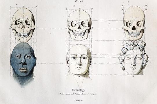 Adriaan Gilles. Determination de l'angle facial de Camper/Camper's Facial Angles; copperplate engraving with original hand coloring from Guerin's Picturesque Dictionary of Natural History; c. 1830