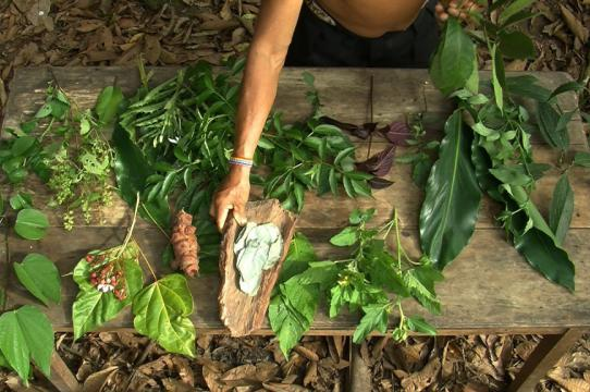 In the Ecuadoran Amazon, Julio Tiwiram shows diverse elements of a forest pharmacy.  (Video still from Ursula Biemann and Paulo Tavares)